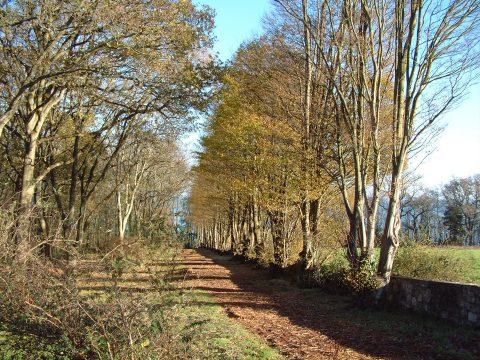 Trees At Priory Bay